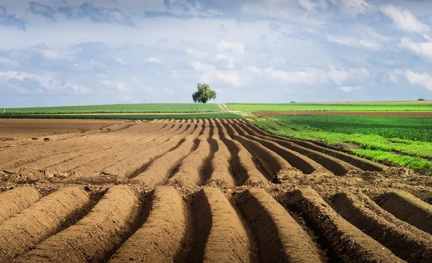 Ограничения на Рынке Продажи Земель Сельскохозяйственного Назначения: Международный Опыт