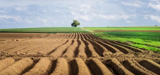 Обмеження на Ринку Продажу Земель Сільськогосподарського Призначення: Міжнародний Досвід