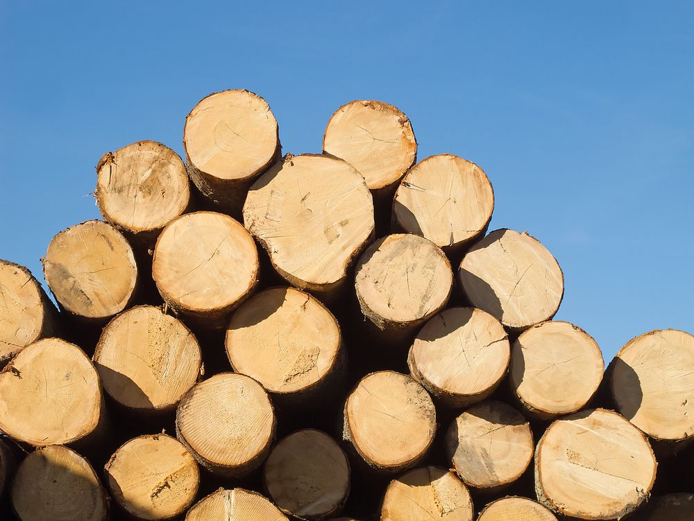 Деревообробна галузь: як захищати та розвивати