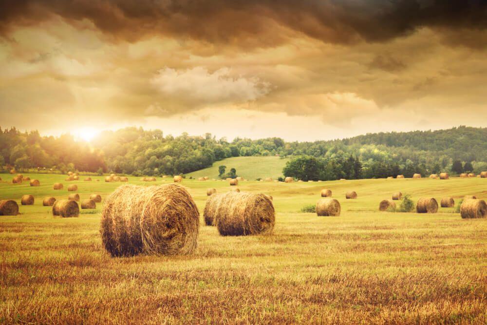 Відкрита заява щодо продовження мораторію на обіг сільськогосподарської землі