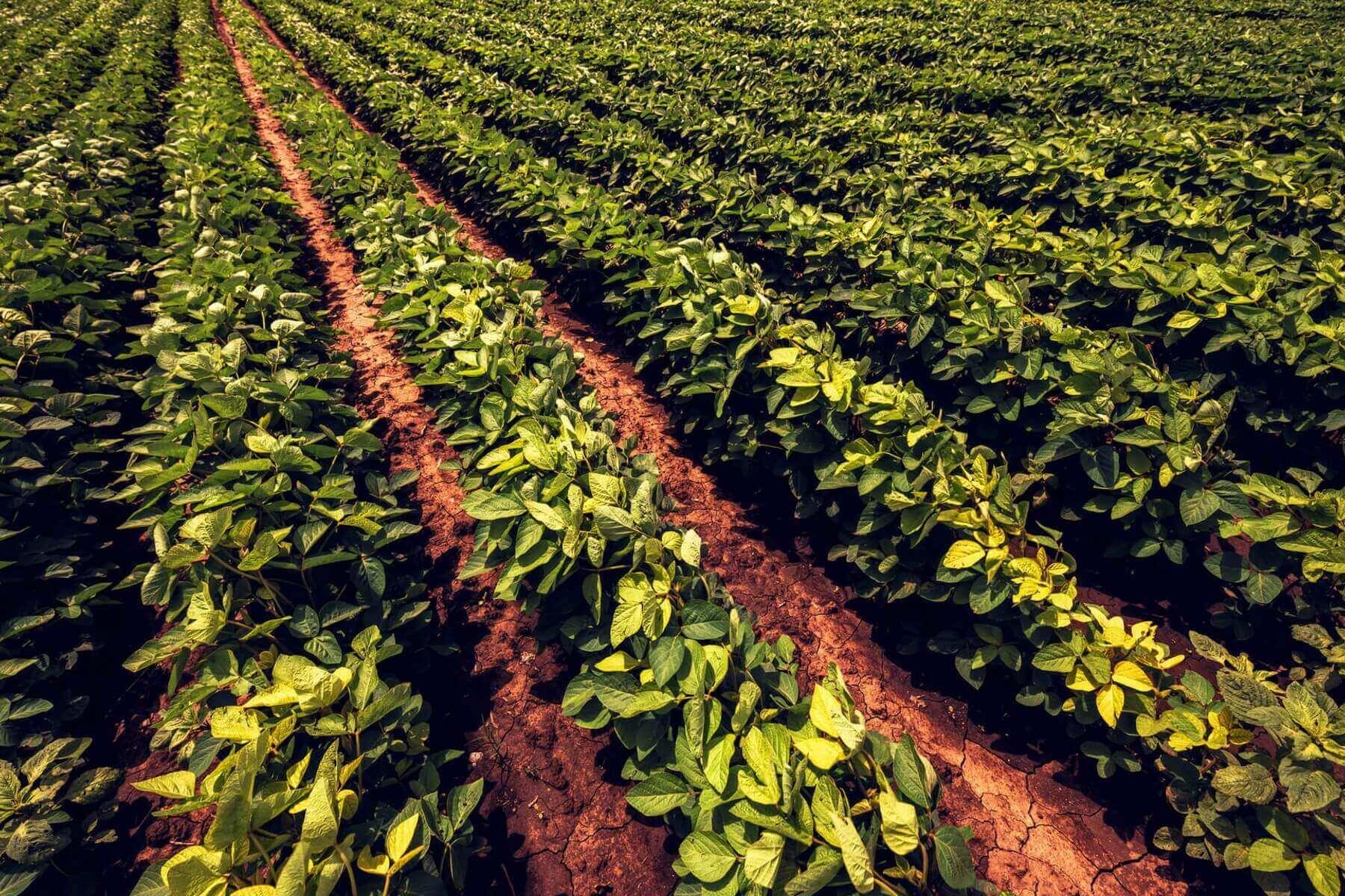 Невідшкодування ПДВ експортерам сої або Про економічні наслідки «Соєвих правок»