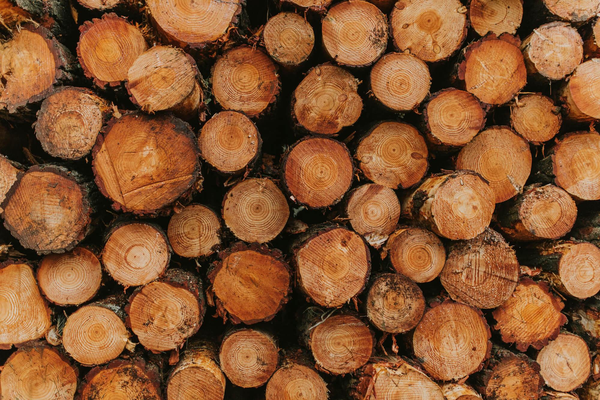 «Доставка» заробітчан і вивіз лісу до ЄС. Як маніпулювали проросійські медіа за тиждень 11-17 жовтня